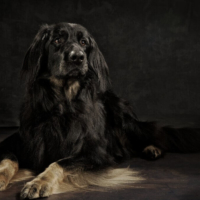 Dundee Dog photographer